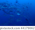 bigeye trevally, diving, bevy 44179062