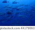 bigeye trevally, diving, bevy 44179063