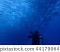 bigeye trevally, diving, bevy 44179064