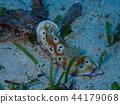 Nudibranch, sea slug, diving 44179068
