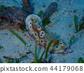 Balicasag岛的海蛞蝓 44179068