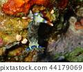 Nudibranch, sea slug, diving 44179069