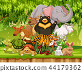 Wild animals in the forest 44179362