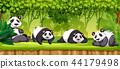 Set of pandas in jungle 44179498