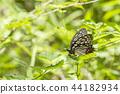 Red moth 44182934