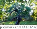 Japanese bonsai in the Japanese garden 44183232