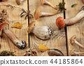 mushrooms on a wooden rustic background 44185864