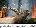 Deer stands in burning forest 44187060