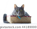 Cats in the box 44189000