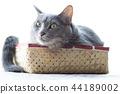 Cats in the box 44189002
