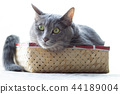 Cats in the box 44189004
