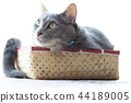 Cats in the box 44189005