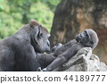 大猩猩 上野動物園 動物 44189777