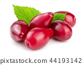 Red berries of cornel or dogwood with leaf isolated on white background 44193142