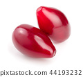 Red berries of cornel or dogwood isolated on white background 44193232