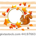 Squirrel and orange maple leaves. 44197663