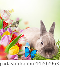 Easter bunny and Easter eggs on green grass 44202963