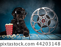 Black funny dog withRetro film production accessories. 44203148