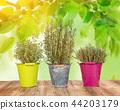 leaf, herb, garden 44203179
