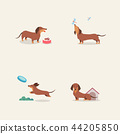 Animal icons collection vector illustration 002 44205850