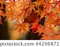 Autumn leaves 44206872