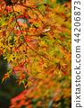 Autumn leaves 44206873