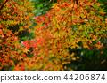 Autumn leaves 44206874