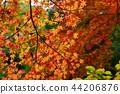 Autumn leaves 44206876