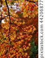 Autumn leaves 44206877