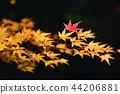 秋葉 44206881