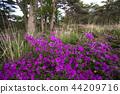 蝦野高原 花朵 花 44209716