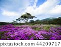 蝦野高原 花朵 花 44209717