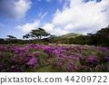 蝦野高原 花朵 花 44209722