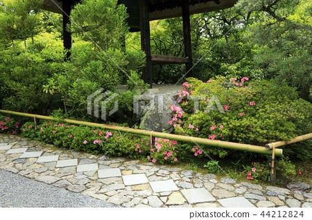 5 월 신록의 光悦寺 - 교토 鷹ヶ峯 - 44212824