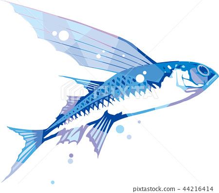 Healthy flying fish 44216414