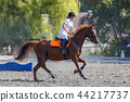 Young horse rider girl galloping on her course 44217737