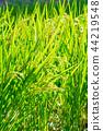 논, 밭, 그린 44219548