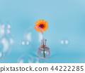 Orange daisy flower in a vase on trendy background. 44222285