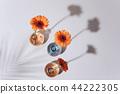 Orange daisy flower in a vase on trendy background. 44222305