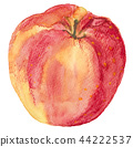 apple, jonagold, fruit 44222537