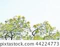이미지, 이미지 사진, background 44224773