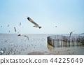 海鸥 鸥 天堂 44225649