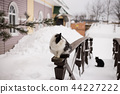Black and white cat is sitting on wooden railing near the country house outdoors at winter 44227222