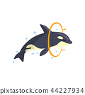 Orca jumping through a ring, sea animal performing in public in dolphinarium vector Illustration on 44227934