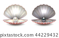 Vector realistic 3d beautiful natural opened pearl shell with pearls inside - white and black color 44229432