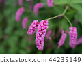 花朵 花 花卉 44235149