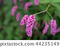 粉紅色的花Oketade 44235149