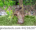 Brown Rabbit holding branch with eating leaf 44236287