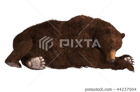 Grizzly Bear isolated on white background 3d illustration 44237004