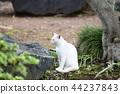 White cat 44237843